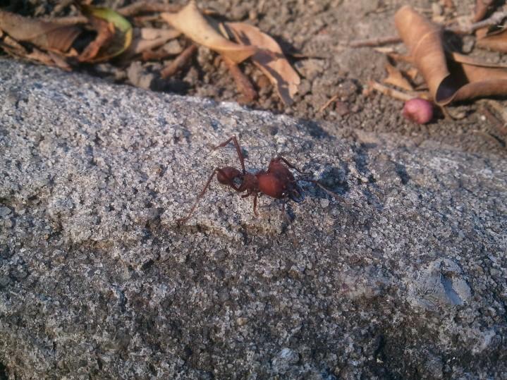 Mon bourreau : une fourmie