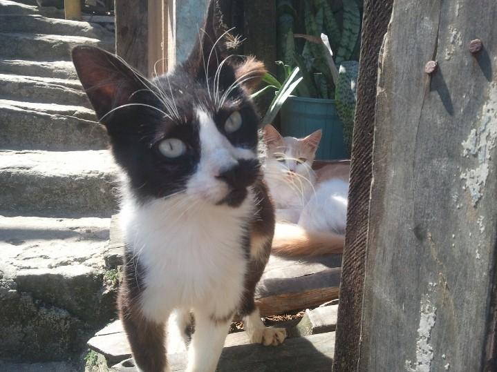 Les nombreux chats peuplant la favelas