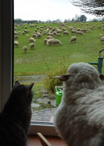Prendre du recul, Je suis pas je-m'en-foutiste... Je relativise! chat et mouton
