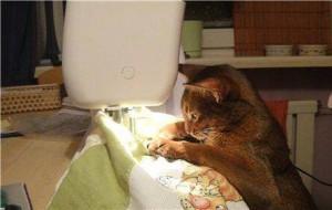 Perfectionner lol cat monbonpote.com, Je suis pas je-m'en-foutiste... Je relativise!  chat machine à coudre, chat qui coud