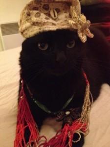 Lol cat, chat mignon, chat déguisé, auto-dérision, humour, se moquer des autres