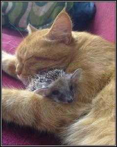 être serrein lol cat monbonpote.com, Je suis pas je-m'en-foutiste... Je relativise! chat mignon et hérisson, chat et hérisson dort