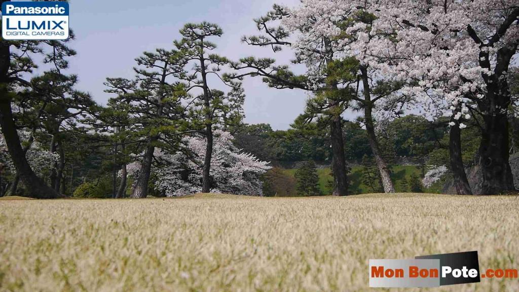 palais impériale, japonais, L'herbe n'est pas toujours verte ailleurs, L'herbe est toujours plus verte ailleurs, l'herbe est toujours plus verte chez le voisin, développement personnel, bonheur, confiance en soi, émotions, voyager, proverbe, citations l'herbe est plus verte, apprécier sa vie, apprécier les choses que l'on a, aimer sa vie