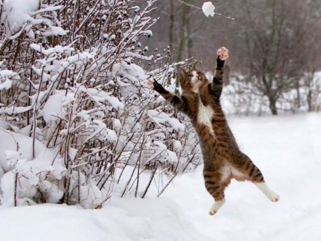 développement personnel, coaching, bonne humeur, humeur, heureux, bonheur, chance, séduction, blanc comme neige,