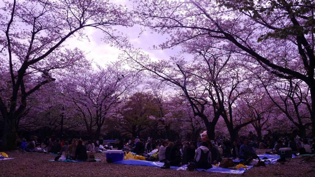 JAPON EXPRESS : Vis ma vie de voyageur au Japon, Vis ma vie de japonais, expérience au japon, cerisiers japonais, temple japonais, kyoto,  voyager au japon, récit au japon, un français au japon, voyager au japon, voyage au japon, partir au japon, expérience japonaise, cerisiers japonais,