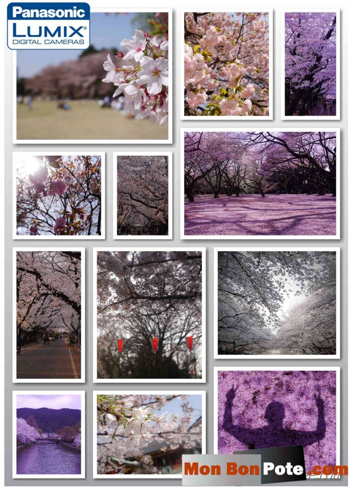 Vis ma vie de japonais, expérience au japon, cerisiers japonais, temple japonais, kyoto,  voyager au japon, récit au japon, un français au japon, voyager au japon, voyage au japon, partir au japon, expérience japonaise, cerisiers japonais,