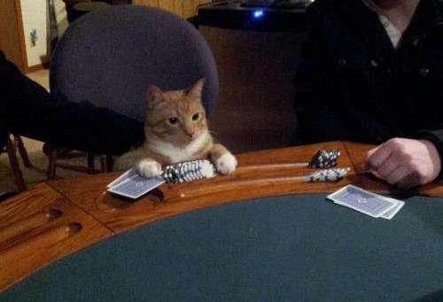 Poker chat, chat qui joue au poker, développement personnel, changer de vie, chance, gagner au jeu, monbonpote, blog bonne humeur