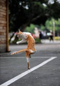Funny dancing cat, chat qui danse, chat marrant, chat migon