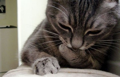 comment être de bonne humeur ? de vivre de bonheur et de bonne humeur , lol cat en train de penser, chat mignon qui pense, chat qui lit