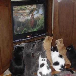 Comment réussir à parler en public sans passer pour un cake ? chats devant tv
