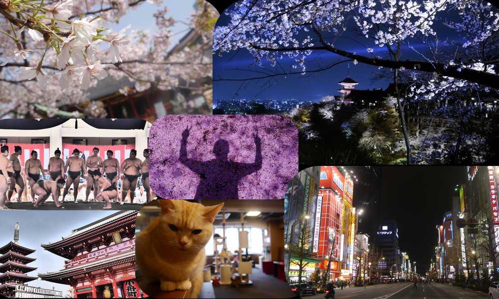 Bilan 2013 : Mon top 10 de mes meilleures réussites, japon