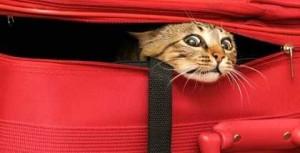 Partir à l'étranger ou rester en France ?