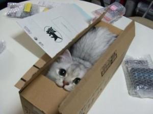 Tuto DIY tableau de loi de l'attraction pour les nuls, tableau de visualisation, lol cat, chat carton,