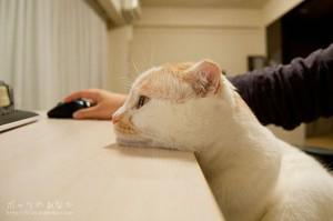 L'ennui : Pourquoi se faire chier peut gravement nuire à la santé ? chat marrant, chat devant ordi, chat tête sur la table, lol cat