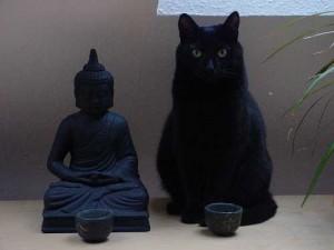 Le bonheur c'est être bien dans sa peau sans vouloir celles des autres, chat zen, lolcat zen