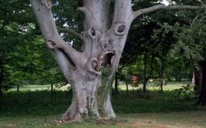 arbre terrifiant, arbre qui regarde, arbre avec des yeux, arbre horrible, Comment avoir de la chance sans avoir des cornes au front ?