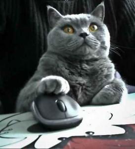 Changer de vie avec son blog, chat qui apprend, chat avec une souris, chat mignon