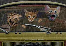 Procrastiner : Être une flemmasse peut coûter la vie, chaton au volant, chaton mignon, chat volant, chat qui conduit
