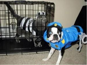 chat prisonnier, chien policier, Vivre sans télé : La télévision m'a tuer