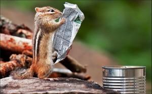 Écureuil qui lit le journal, Écureuil  marrant, Vivre sans télé : La télévision m'a tuer