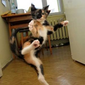 Comment être un ninja de la créativité, chat coup de pied, chat ninja, lolcat