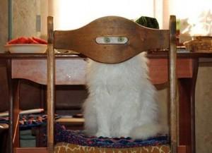Comment être un ninja de la créativité, chat ninja, chat chaise, chat caché