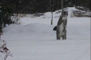 Comment être un ninja de la créativité, chat ninja, chat dans la neige, chat baton star wars