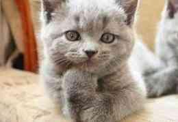 lol cat qui pose, Apprendre à s'aimer soi-même avant de trouver l'amour (témoignage), comment s'aimer soi-même, comment s'aimer, je ne m'aime pas. Je veux m'aimer