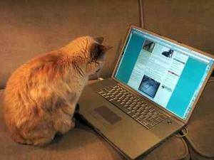 chat_blogging, chat qui blog, chat ordinateur, chat qui lit, Les 7 différences entre infopreneur et un entrepreneur classique ?