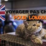 Comment voyager pas cher pour Londres ? voyager à londres, visiter londres pas cher, week-end londres pas cher, voyager londres pas cher, visite londres pas cher, pas cher londres, chat anglais, chat mignon Angleterre, lol cat british, british cat ,