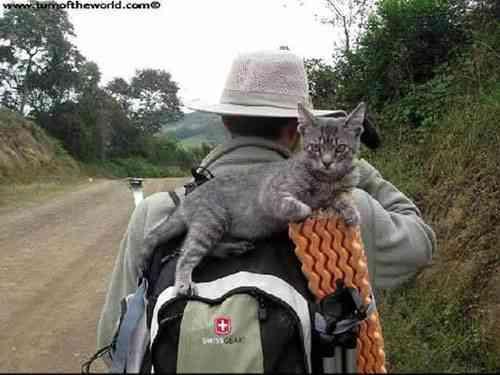 Envie de quitter la france, chat qui voyage, nomade digital, chat nomade digital, voyager seul, citation voyager seul