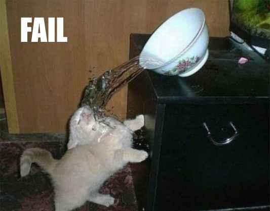 ralentir pour réussir, changer de vie, fail chat, chat marrant, chat gros yeux