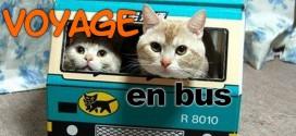 Voyage en bus: Voyagez pauvre, vivez riche