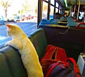 chat bus, voyage en bus, voyager en bus, voyage en bus pas cher, voyage bus, bus voyage, comment voyager en bus