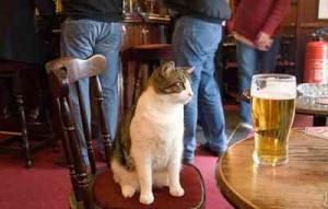 Lol cat, chat anglais, apprendre l'anglais, parler anglais, voyager pour apprendre l'anglais, voyager seul, voyager pour apprendre
